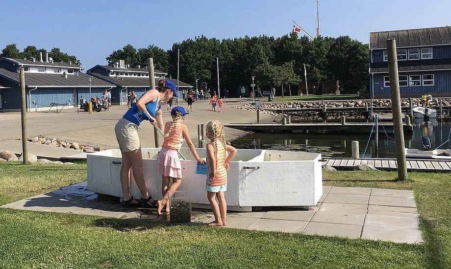 Havnen i Sønderborg byder særligt på spændende oplevelser for børnefamilier. Foto: Tina Hartun Nielsen