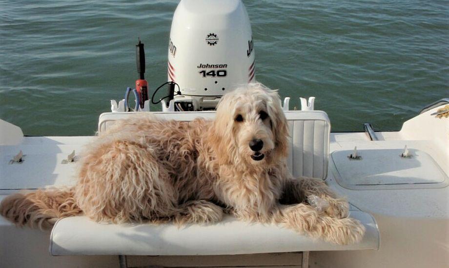 Tag hunden med ud at sejle allerede som hvalp, så den vænner sig til det.