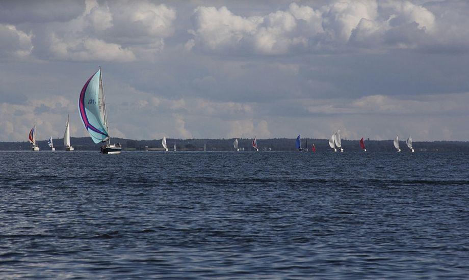 Albin Express DEN 268 var hurtigst ved dette års Brandsø Rundt. Ombord var skipper Frands Harald Leth-Espensen samt gasterne Jakob Sinning, Mogens og Jonathan Bomberg. Foto: Ida Svenningsen