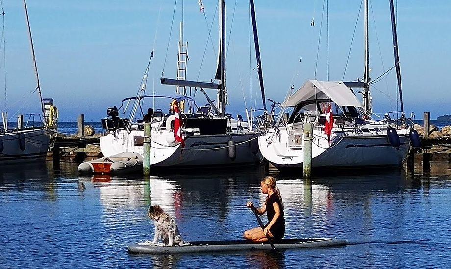 Der kommer unge familier ind i havnene i et omfang, der ikke har set længe. Her SUP-sejlads i Rudkøbing i juli i år. Foto: Troels Lykke