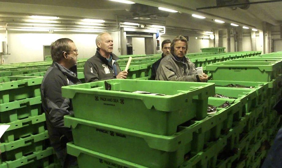 Den rekordstore tun blev solgt på fiskeauktionen i Hanstholm. Foto: YouTube