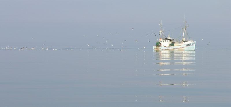 Kattegatkutter, fisker, jomfruhummer